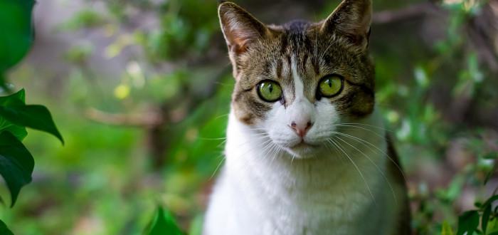 Velká kočička leps