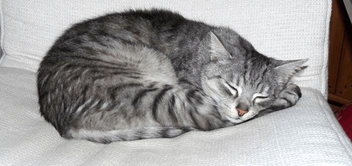 pouze eben kočička