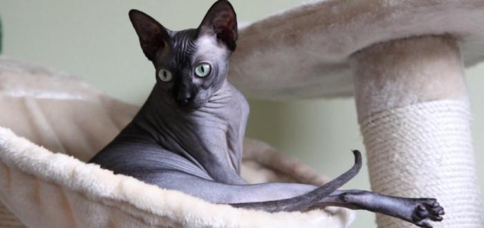 bezsrstá kočička fotky sledujte trojice sexuálních videí