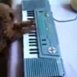 Zpívající pes