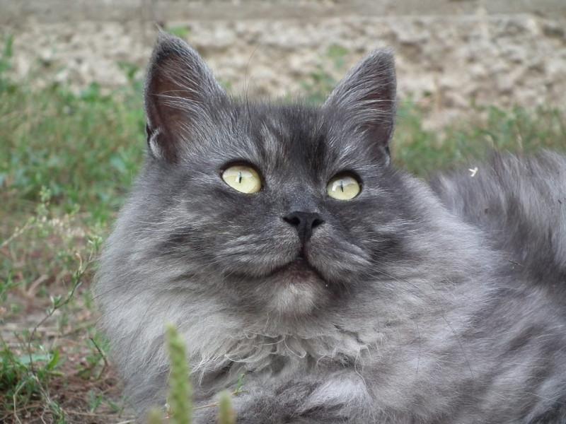 Eben sladké kočička fotky